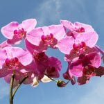 rainflower-product-Peruvian-Amazon-Love-Orchid-Flower-Essence